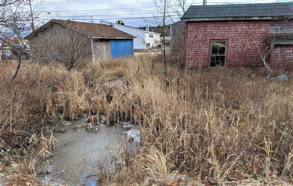 photo of marshy area behind old run down building