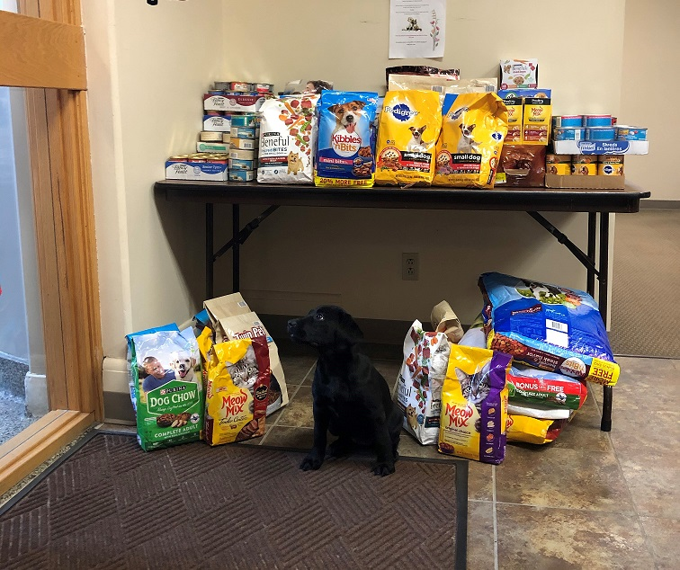 photo of a black lab puppy sitting in front of dog and cat food stacked on and under a table